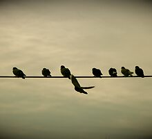 Birds on a wire by Tracey Bransfield