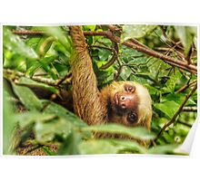Smiley Sloth Poster