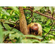 Smiley Sloth Photographic Print