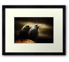 Blackbird moody Framed Print