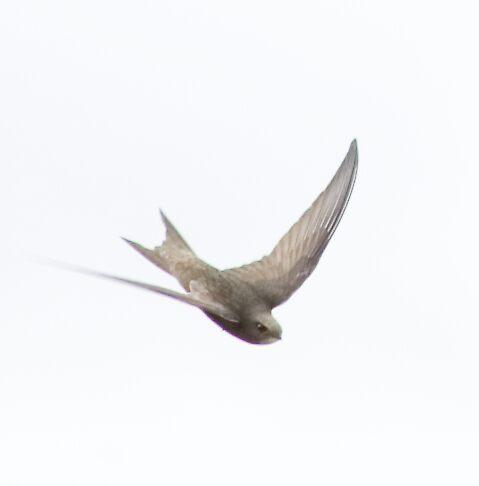 So Swift by Mark Baldwyn