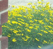 begining of Summer by daldrich