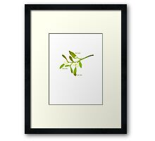 Kiss me mistletoe Framed Print