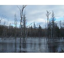 Freezing Swamp Photographic Print