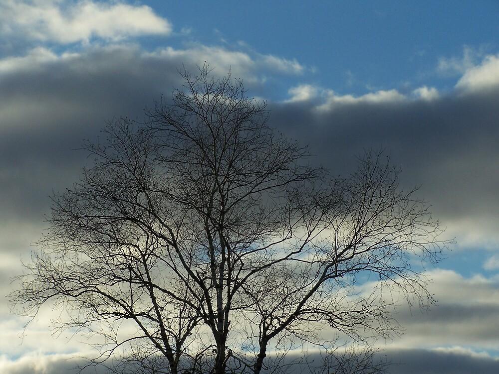 Cloudy Tree Top by Gene Cyr