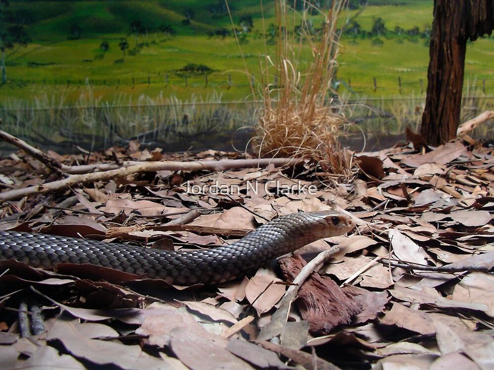 Eastern Brown Snake by Jordan N Clarke