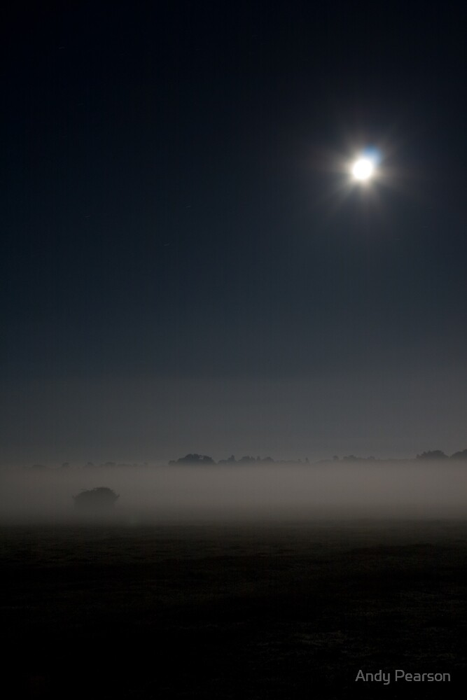 New Forest by Moonlight by Andy Pearson