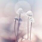 Very soft by Bob Daalder
