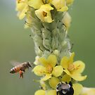 busy as three bees by Christopher  Ewing