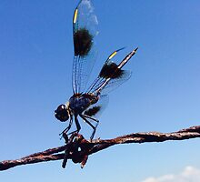 Dragonfly by todd souvignier
