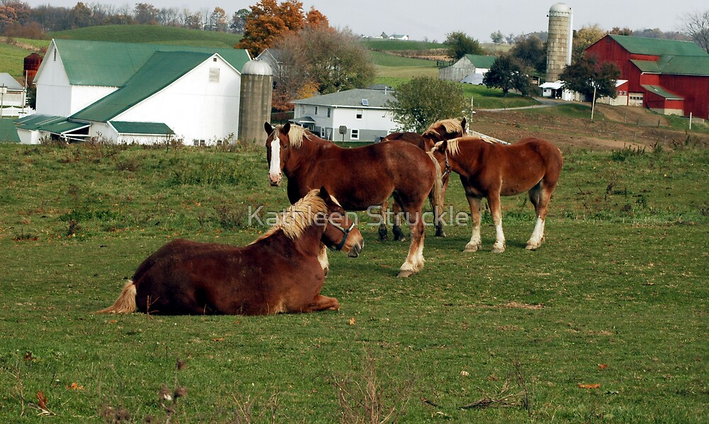 Horses On Farm by Kathleen Struckle