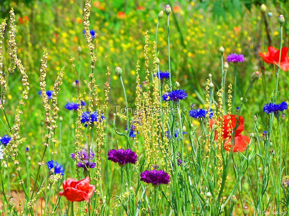 Wild Flowers by Tonye Banks