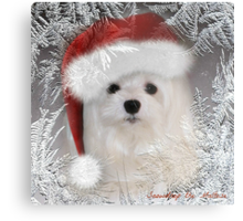Snowdrop the Maltese - A Frosty Morning ! Metal Print