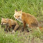 Baby Fox with Mom by JamesMichael