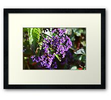 Purple Nature Framed Print