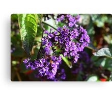 Purple Nature Canvas Print