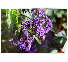 Purple Nature Poster