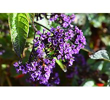 Purple Nature Photographic Print