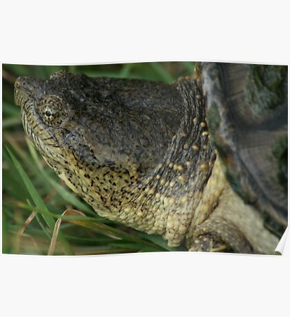 Snapping Turtle Poster