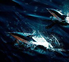Dolphin Joy by Doug Thost