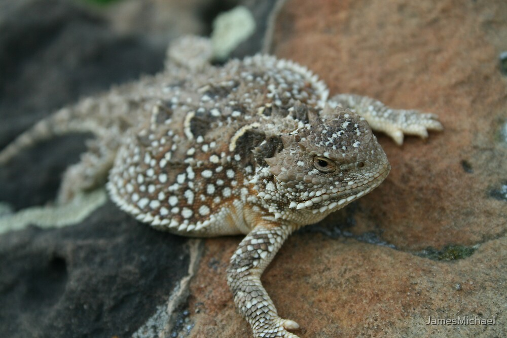 The Horned Lizard by JamesMichael