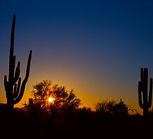 Just Another Sonoran Desert Sunrise by Bo Insogna
