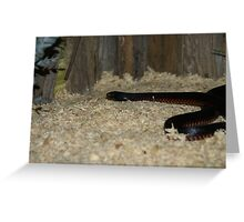 Red Belly Black Snake Greeting Card