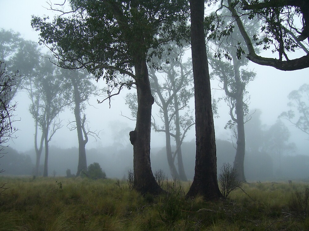 trees guarding the mist - with unusual thick burls on trunks by gaylene