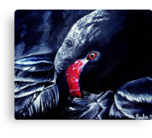 The Resting Swan Canvas Print