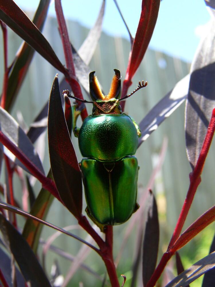 Decembers Beetle 2 by PuckMorrow