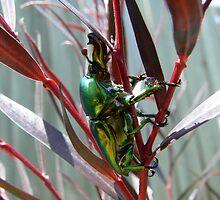 Decembers Beetle 3 by PuckMorrow