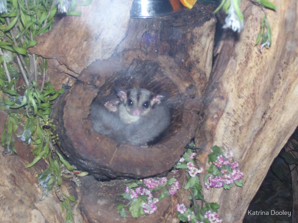 baby possum by Katrina Dooley