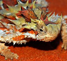 Thorny devil by Stewart Macdonald