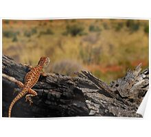 Central netted dragon Poster