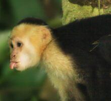 Cheeky Monkey! Wild Capuchin  Sticker