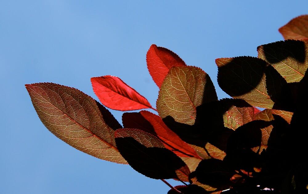 Leafy shadows by HeidiD
