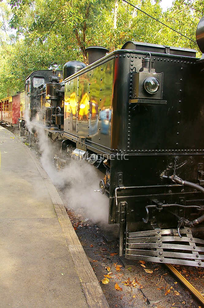 Puffing Billy 5 by Magnetic