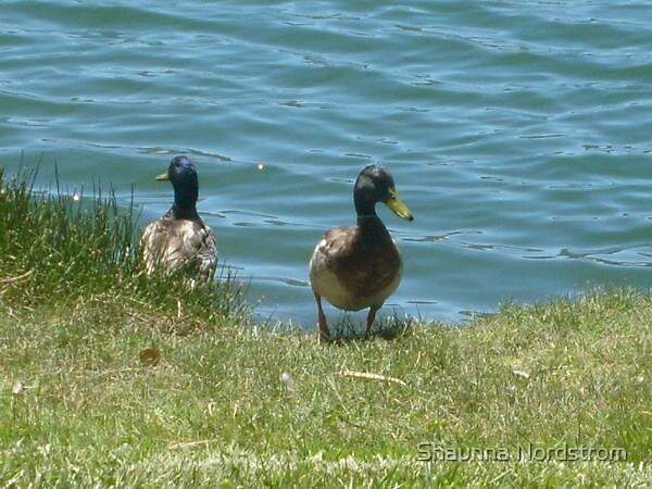 Ducks at the Lake. by Shaunna Nordstrom