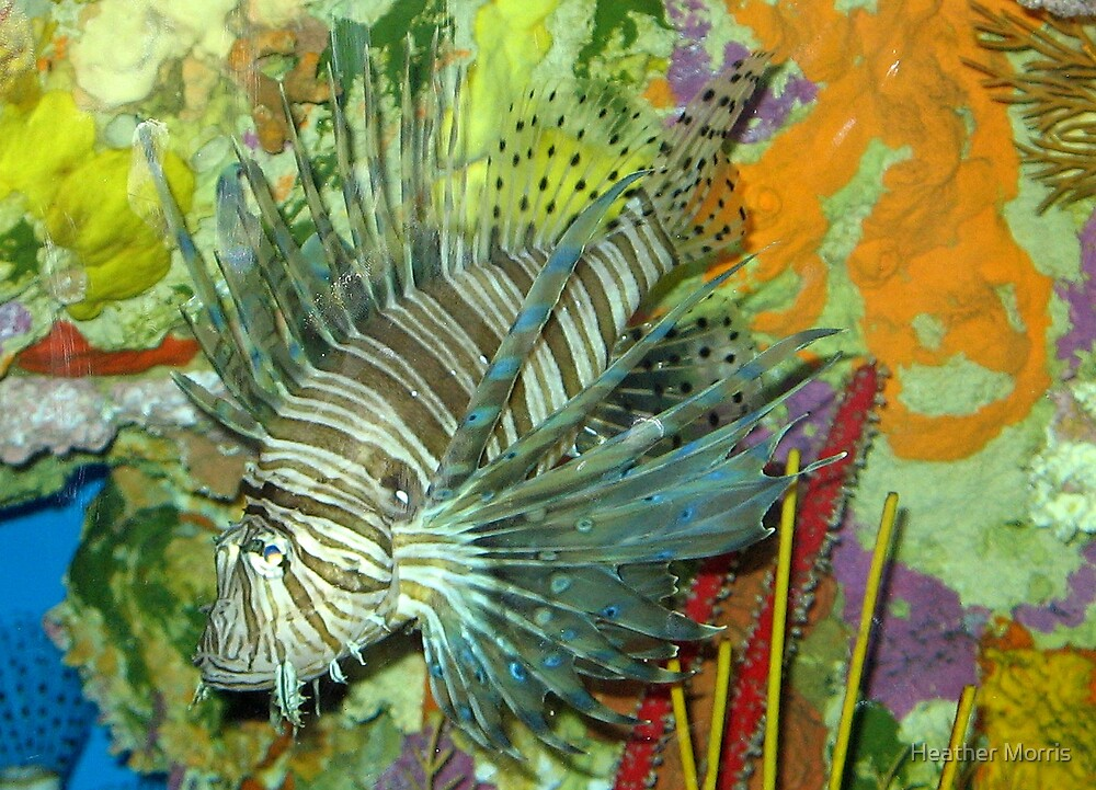 Lionfish by Heather Morris