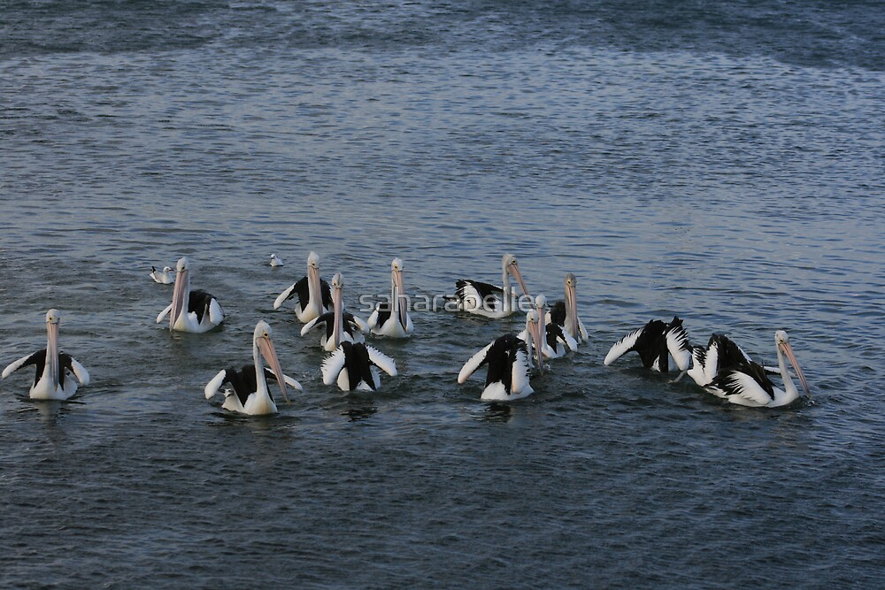 Group Formation by saharabelle