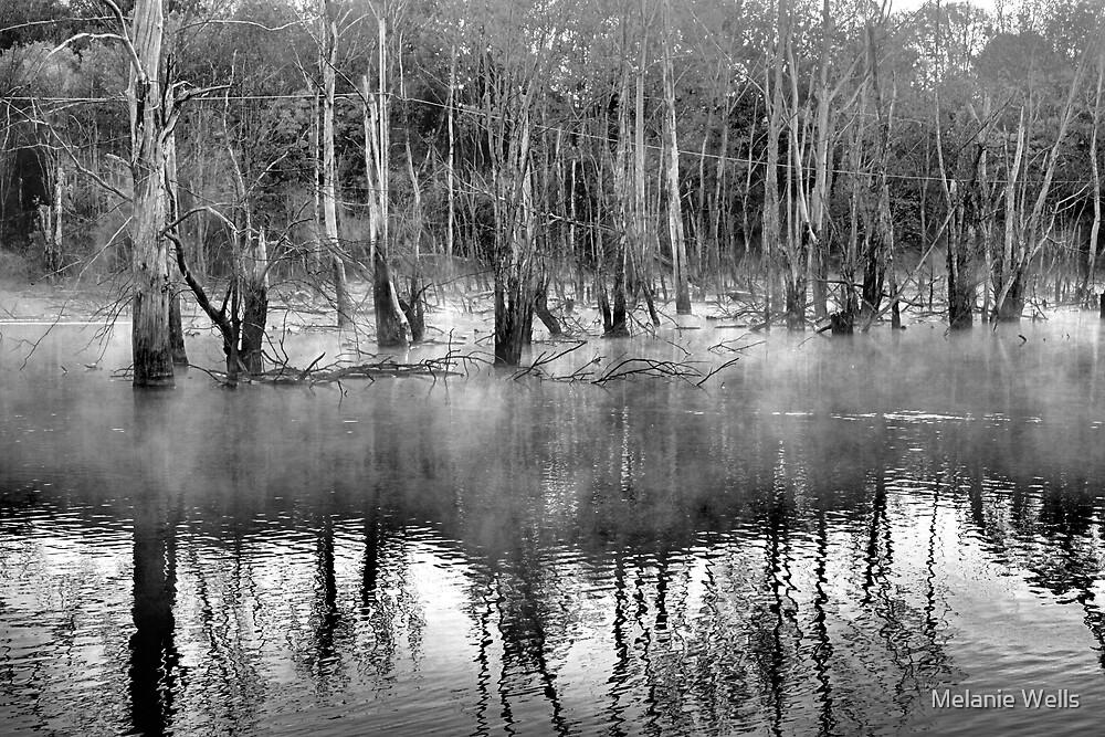 Misty Foggy morn by Melanie Wells