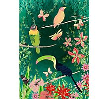 TROPICAL BIRDS (and flowers, and bugs and butterflies) Photographic Print