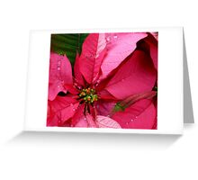 Raindrops On The Poinsettia Greeting Card