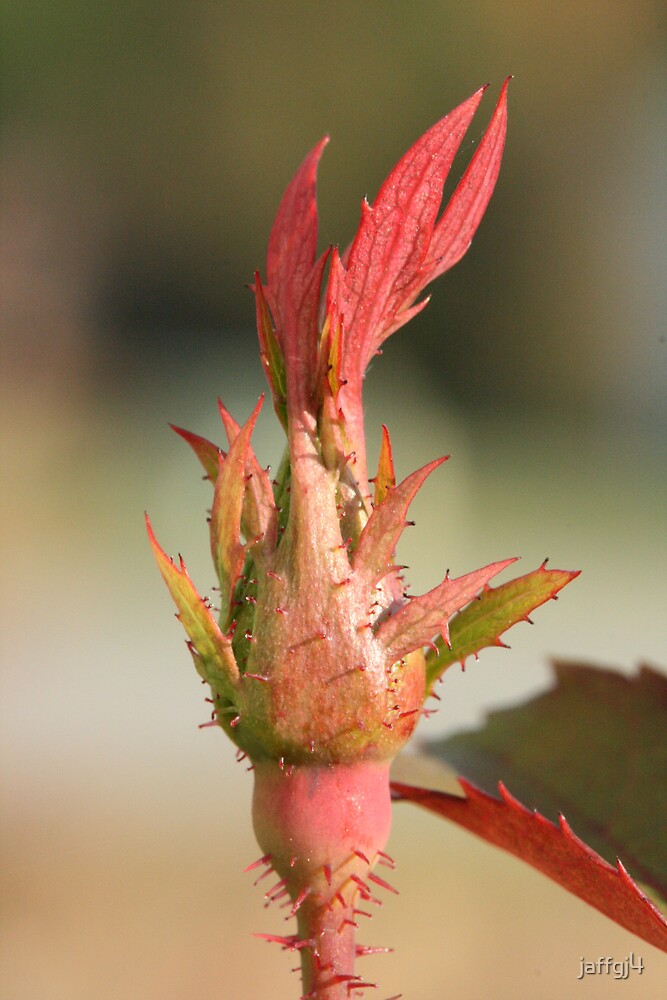 Fall rose new growth by jaffgj4