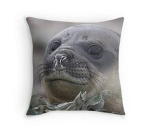 Angel Eyes  ~  Female Southern Elephant Seal Throw Pillow