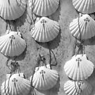 Scallop shells by Richard McCaig