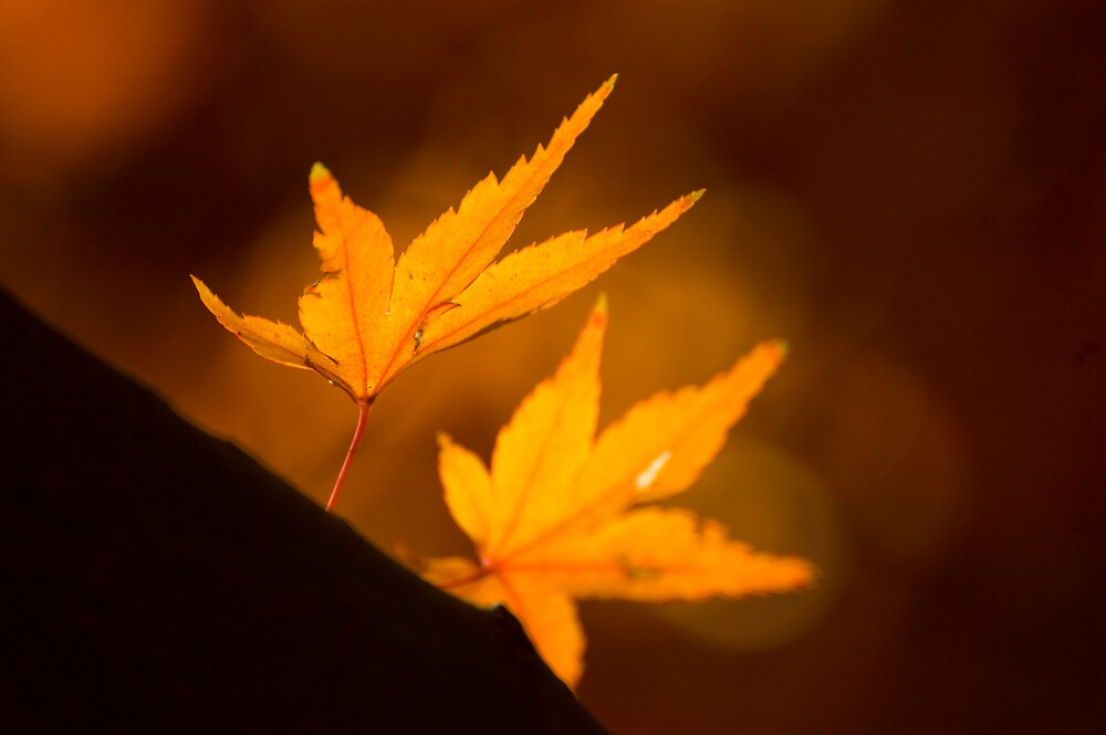 The Last Leaves by David Linkenauger
