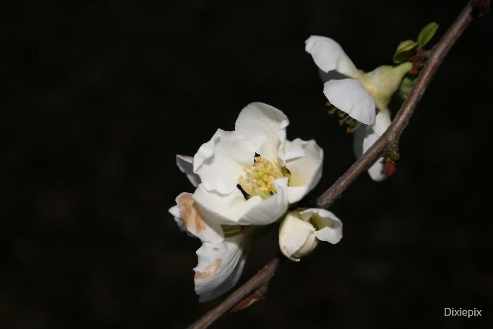 White Flower by Dixiepix