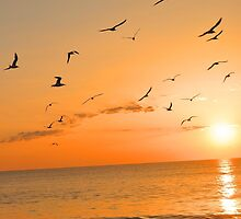 Seagulls in the Sunset by Tiltedgiraffes