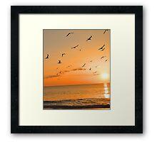 Seagulls in the Sunset Framed Print